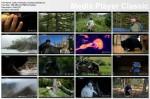Dzika Ameryka / America The Wild (2011) PL.TVRip.XviD / Lektor PL