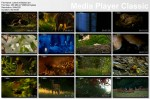 Le¶ne królestwo / Kingdom of the Forest (2010) PL.TVRip.XviD / Lektor PL